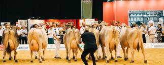 German Dairy Show