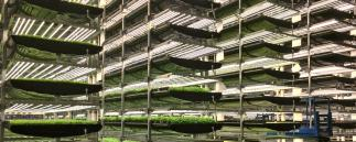 AeroFarm Vertical Farming