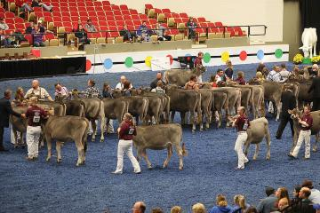 World dairy expo 2017 madison showring brown swiss
