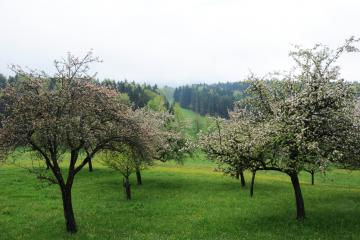 Streuobstwiese Oberbayern
