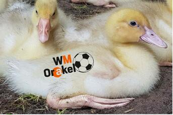 Enten-WM-Orakel